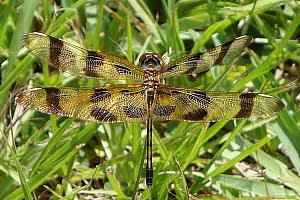 dragonfly closeup photo